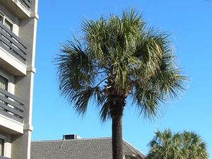 palmetto at holiday inn oceanfront