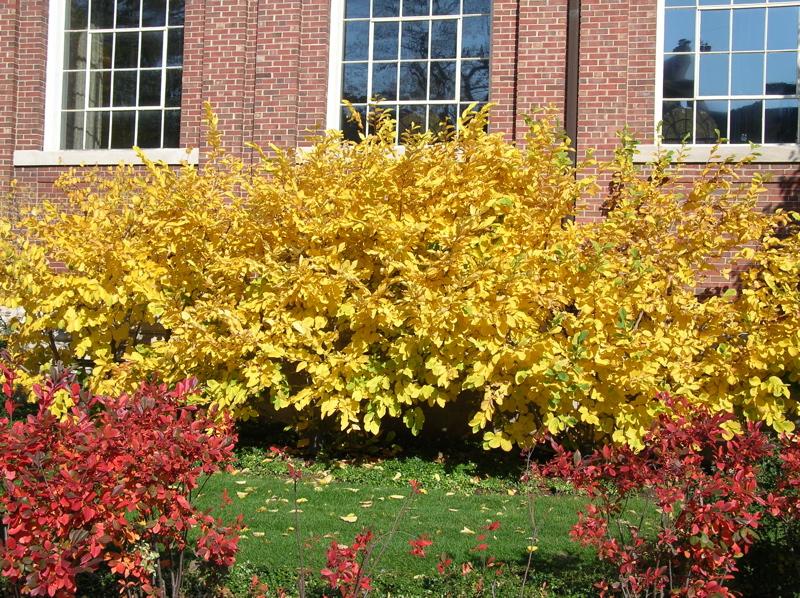 November Top 10 Moss Plants William S Web